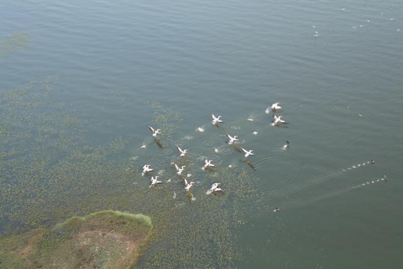 Kuş Gölü Kuşlar